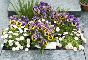 Blumen fuer Friedhof